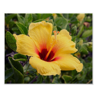 Yellow Hibiscus Flower | Poster