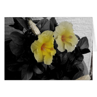 Yellow Hibiscus selective colour photo Card