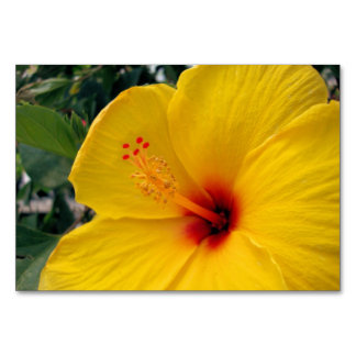 Yellow Hibiscus Table Cards