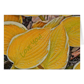 "YELLOW HOSTAS LINED WITH CREAM COLOR /""LOVE YOU"" CARD"
