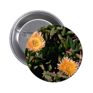 Yellow Ice Plant flowers Pin