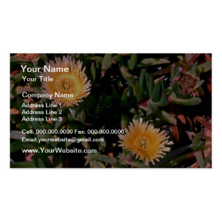 Yellow Ice Plant flowers Business Card