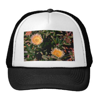 Yellow Ice Plant flowers Hats
