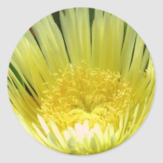 Yellow Ice Plant Sticker
