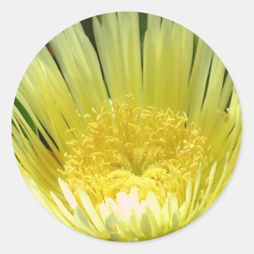 Yellow Ice Plant Sticker