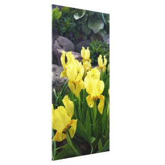 Yellow Iris flowers Canvas Print