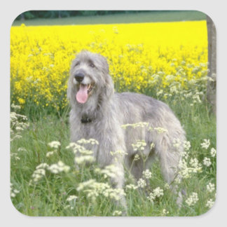 yellow Irish wolfhound flowers Square Sticker