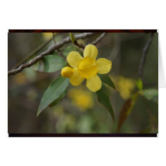 Yellow Jasmine Card