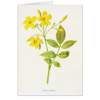 Yellow Jasmine Vintage Botanical Illustration Greeting Card