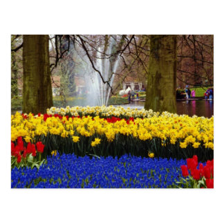 yellow Keukenhof gardens, Amsterdam, Netherlands f Postcard