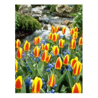 yellow Keukenhof Gardens, Holland flowers Postcard