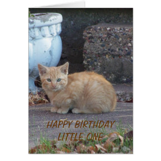 Yellow Kitten, Birthday Child Greeting Card