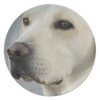 Yellow Lab Plate