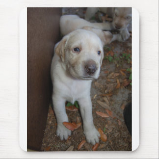 Yellow Lab Puppy 3 weeks Mouse Pad