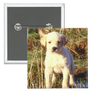 Yellow Lab Puppy Button