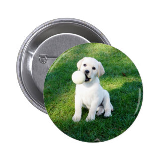 Yellow Lab Puppy Pinback Button