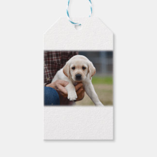 Yellow Lab Puppy Being Held By a Friend Gift Tags