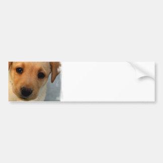 Yellow Lab Puppy Bumper Sticker