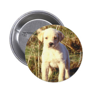 Yellow Lab Puppy Buttons