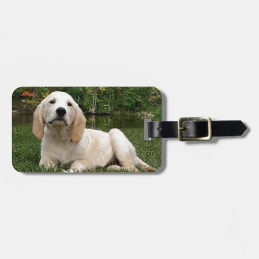 Yellow Lab Puppy in Fall Tags For Luggage