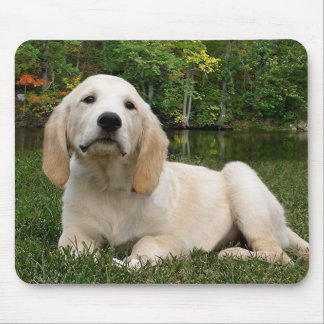 Yellow Lab Puppy in Fall Mousepads