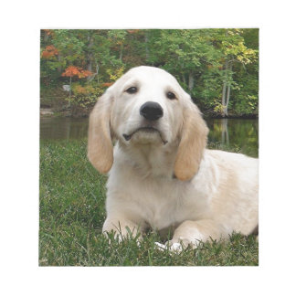 Yellow Lab Puppy in Fall Memo Note Pads