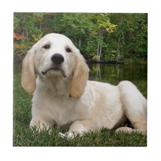 Yellow Lab Puppy in Fall Small Square Tile