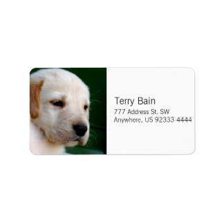 Yellow Lab Puppy Label