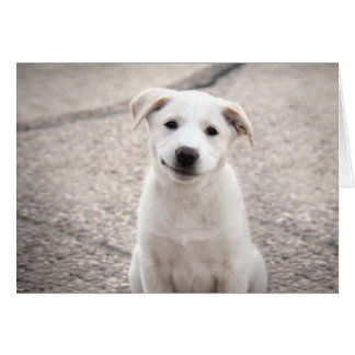 Yellow Lab Puppy - Paper Products Greeting Card