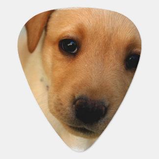 Yellow Lab Puppy Pick