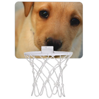 Yellow Lab Puppy Mini Basketball Hoops