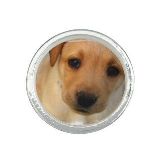 Yellow Lab Puppy Photo Ring