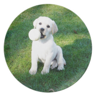 Yellow Lab Puppy Party Plates