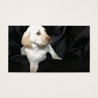 Yellow lab puppy Sadie Business Card