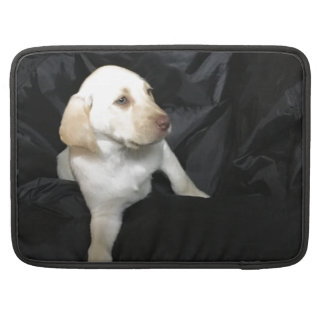 yellow lab puppy, sleeve for MacBook pro