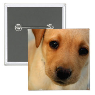 Yellow Lab Puppy Square Pin