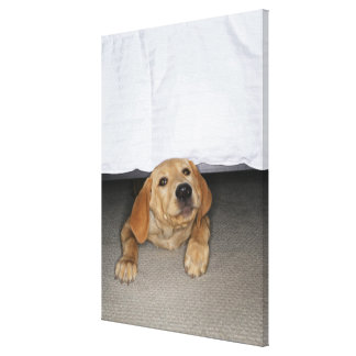 Yellow lab puppy stuck under bed gallery wrap canvas