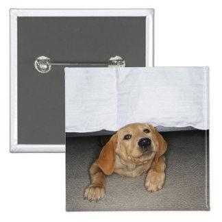 Yellow lab puppy stuck under bed pinback button