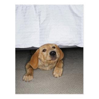 Yellow lab puppy stuck under bed postcard