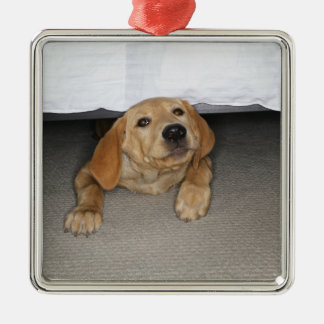 Yellow lab puppy stuck under bed Silver-Colored square decoration
