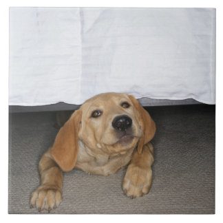 Yellow lab puppy stuck under bed large square tile