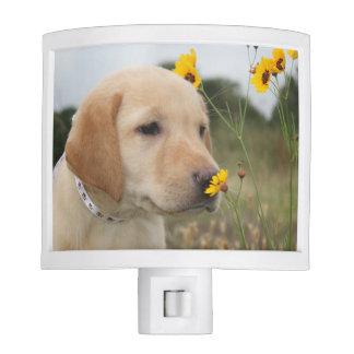Yellow lab puppy + yellow wildflower = SMILES! Nite Light