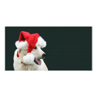 Yellow lab Santa Claus Photo Greeting Card