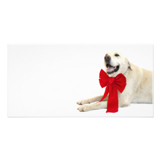 Yellow labrador Christmas Customised Photo Card