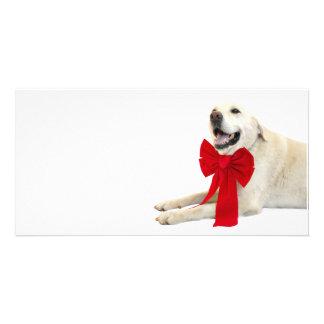 Yellow labrador Christmas Customized Photo Card