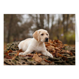 Yellow Labrador Puppy In Autumn Greeting Card