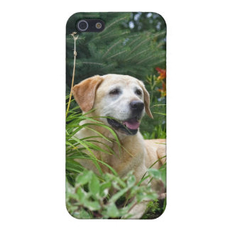 Yellow Labrador Retriever in a flower garden. Cover For iPhone 5/5S