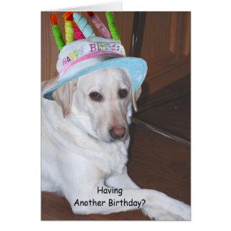 Yellow Labrador Retriever in Birthday Hat Card