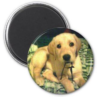 yellow labrador retriever puppy 6 cm round magnet