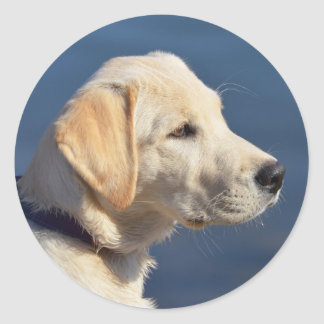 Yellow Labrador Retriever Puppy Classic Round Sticker